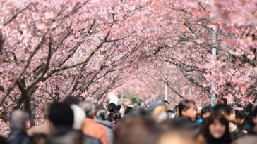 japonski-crowdfunding-1